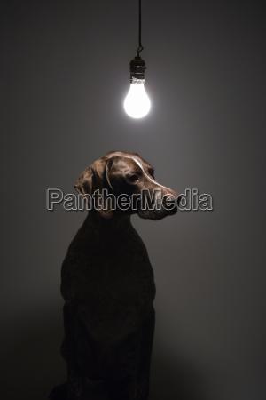 cane sotto la lampadina