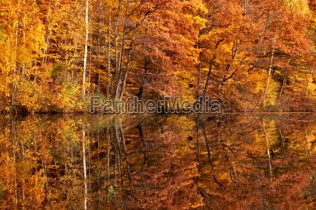 albero alberi riflesso colori autunnali acqua
