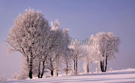 albero alberi inverno brina neve paesaggio