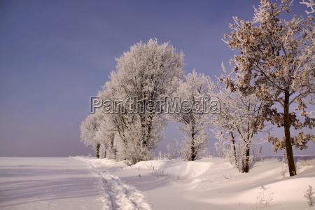 albero alberi inverno freddo maturo pista