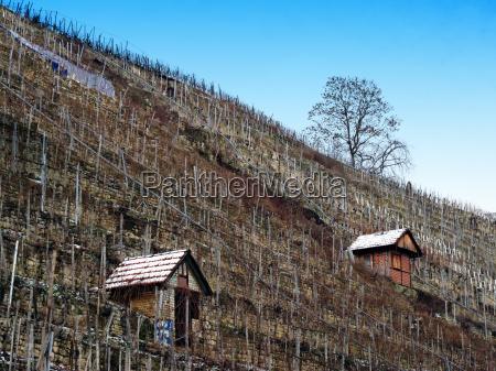 casa costruzione albero inverno agricoltura vigneto