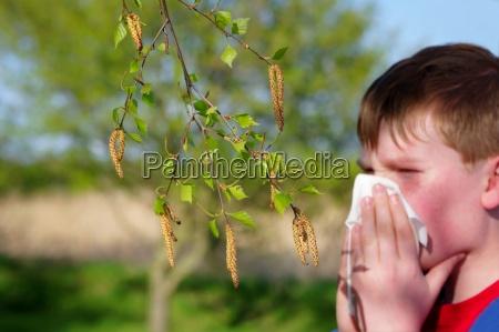 allergia al polline di betulla