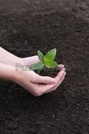 giardino concime crescita crescere giardini terriccio