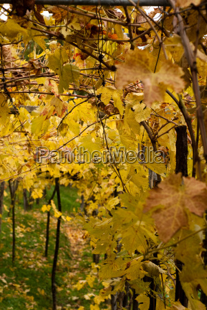 blu foglia enorme grafica parco foglie