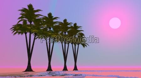 albero deserto tramonto viola oasi tropicale
