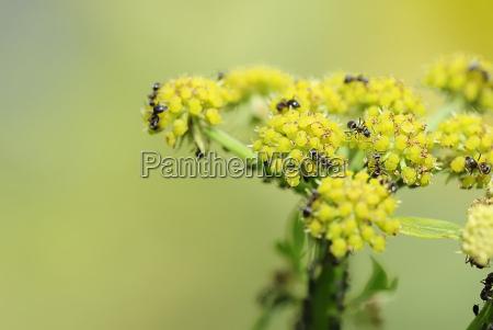 giardino insetto formica ombrella in salita