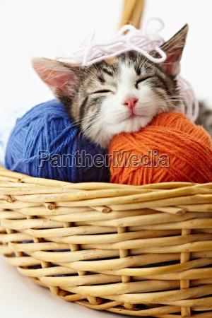 gatto gioca con il filato