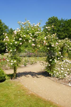 parco giardino fiore fiori rose cimitero