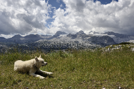 cane ghiacciaio montagna paesaggio natura nuvole