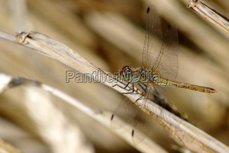 primo piano close up insetti animali