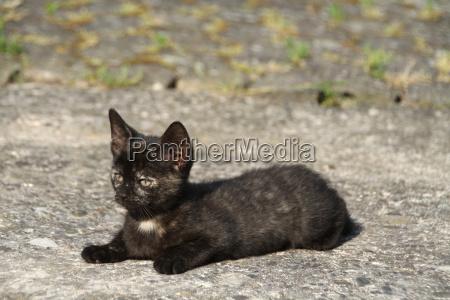 cucciolo tartaruga gattino gatto gatta