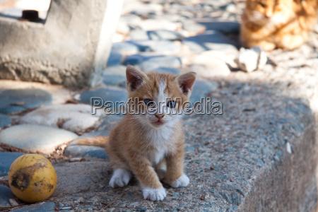 animali domestici cucciolo animale giovane gattino