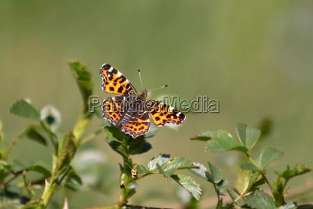 mosche insetto farfalla coccinella