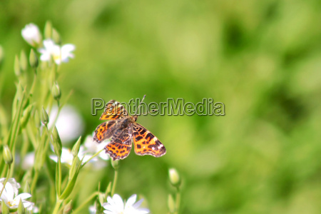 insetto farfalla falena natura