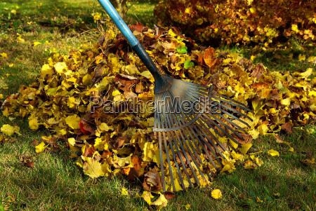 fogliame harken foglie rake 02