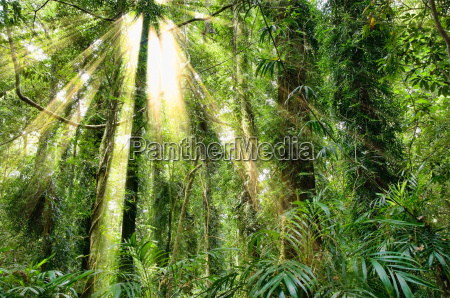 sunlight in dorrigo world heritage rainforest