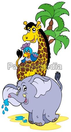animale africa elefante animali africano giraffa