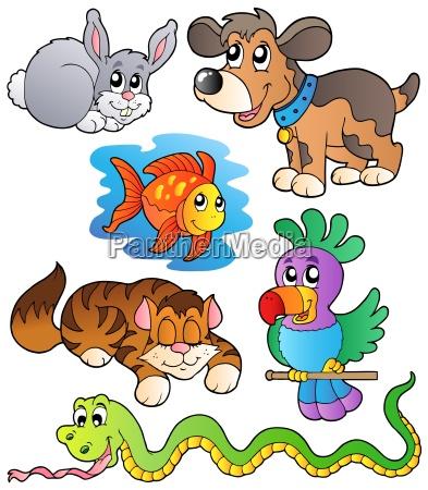 animale animale domestico fauna animali animali