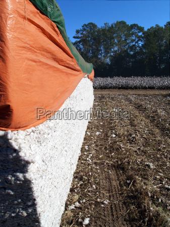 industria agricoltura vendemmia sud georgia cotone