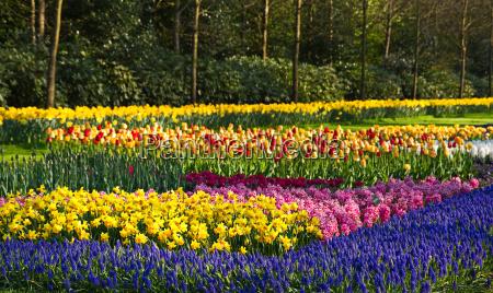 giardino fiore fiori tulipani giacinti primavera