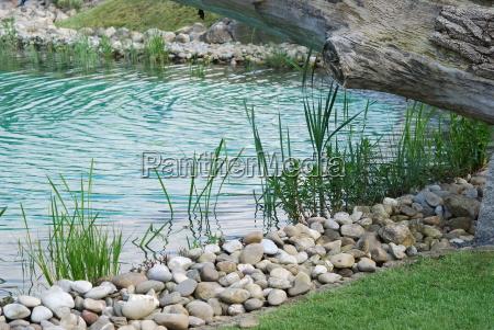 pianta acquatica riva impianto piantina stagno