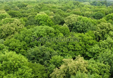 foresta decidua visto dallalto in estate