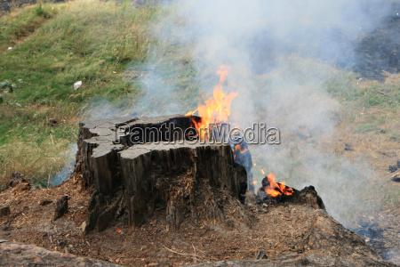 fumo pericolo albero rischio legno nero