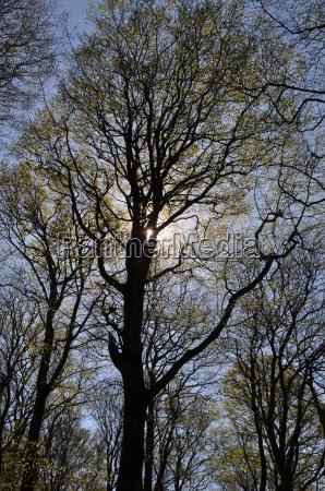 albero misticismo screensaver forza cielo firmamento