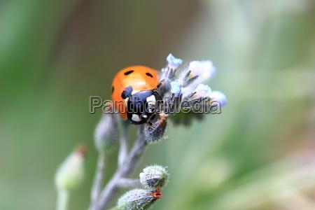 primo piano close up fiore fauna