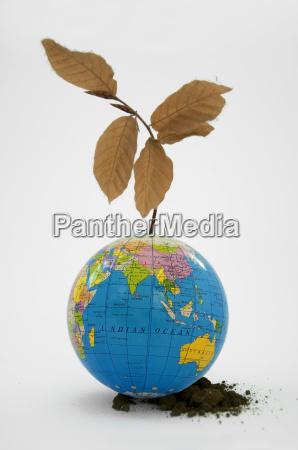 globe with dried plant