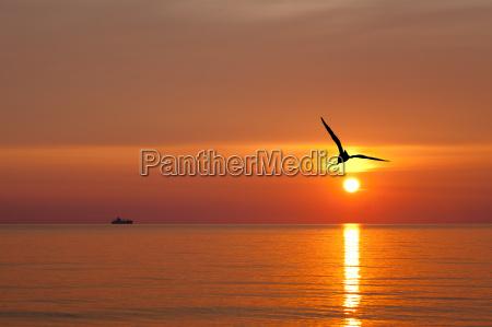 uccello uccelli alba acqua mar baltico
