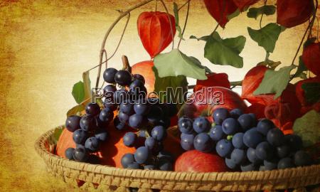 garden crop in basket retro