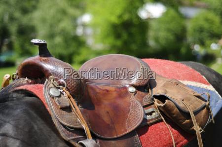 cavallo dettaglio sella