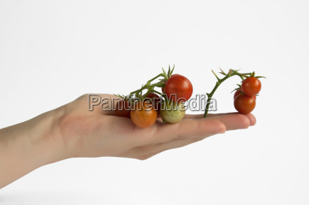 hand holding cherry tomatos