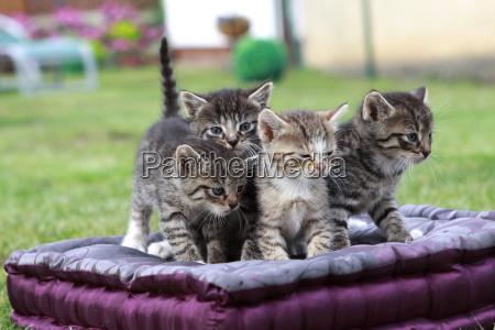 mammifero gatti piccolo poco breve prole