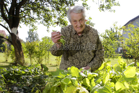 senior joy has in the gardening
