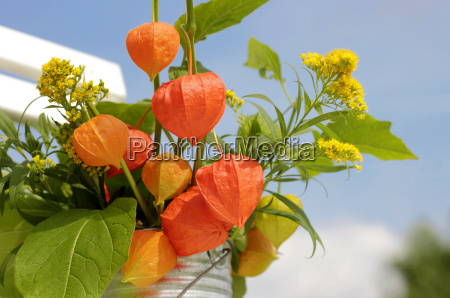 bouquet with physalis