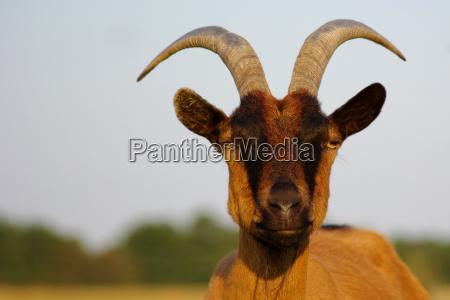 cibo ambiente animali agricoltura capre berlino