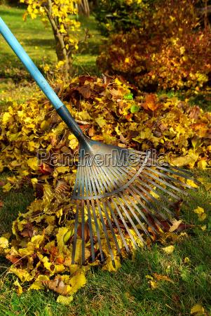 foglia giardino colorato giardini rastrellare spazzare