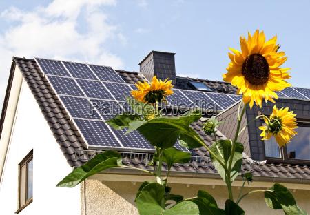 celle solari sul tetto dietro girasoli