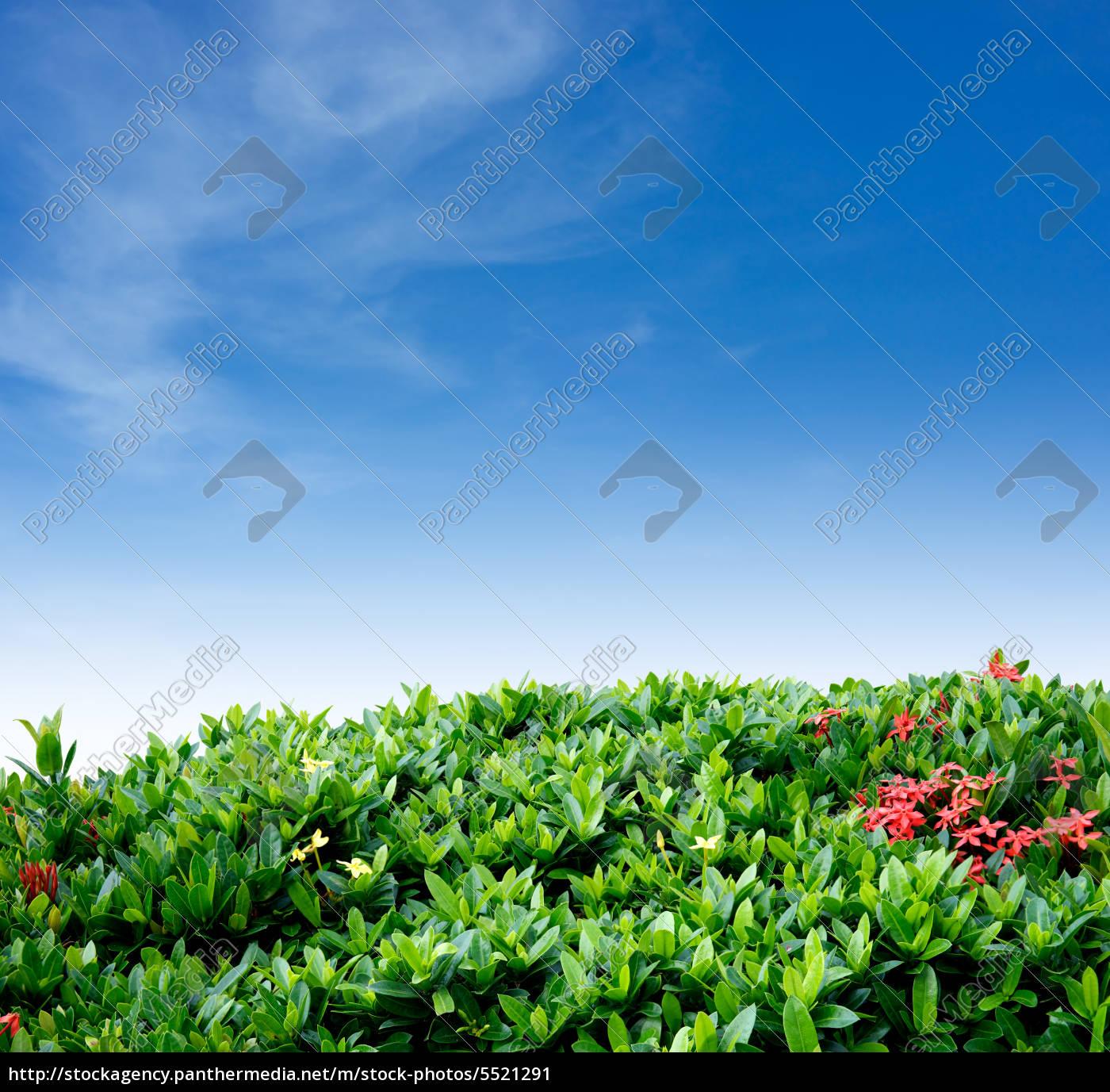 arbusto, recinzione, e, cielo - 5521291