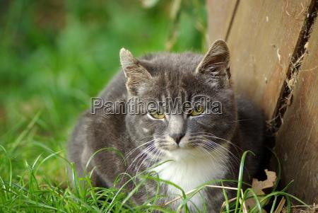 ritratto cucciolo animale giovane gatto gatta