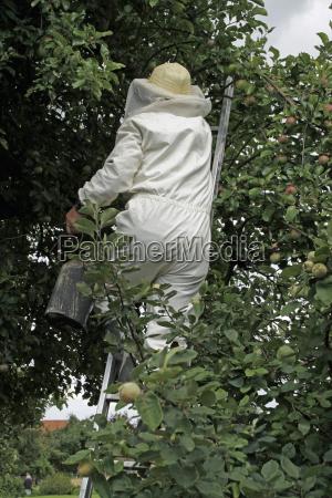 insetti tuta di protezione calabroni trasferimento