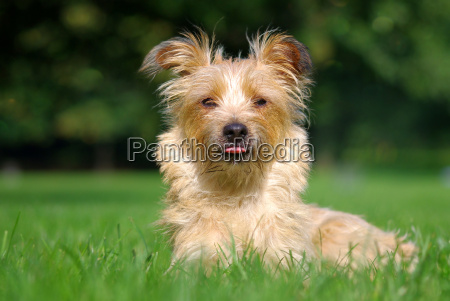 ambiente animali cane cani terrier natura