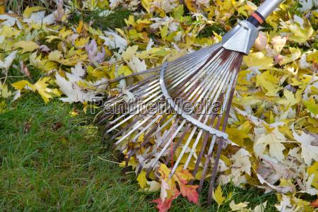 giardino foglie foglie di autunno giardinaggio