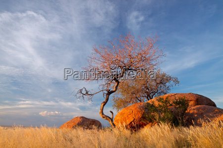 massi di granito e alberi
