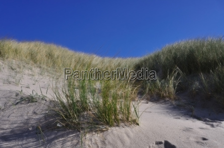 dune with a bright blue background