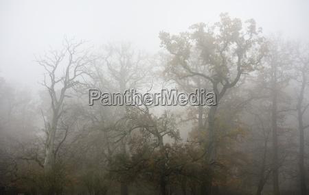 nebel, in, wisentgehege, wald, , springe, deutschland. - 5793035