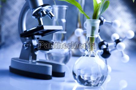vetreria di laboratorio contenenti piante in