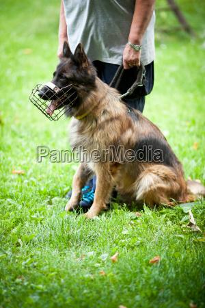 comando animale domestico peluche cane master